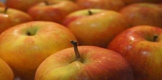 Kolesterol Diturunkan dengan Buah Apel