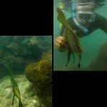 snorkeling sadranan 3