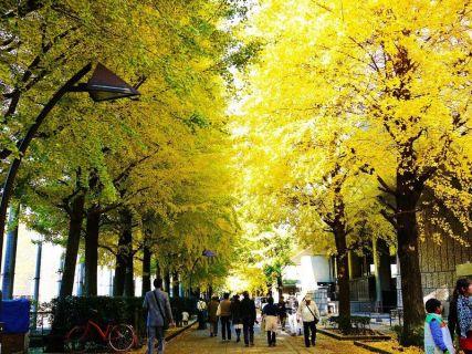 上野公園の紅葉の2017年の見頃は?アクセス・混雑情報や見どころも