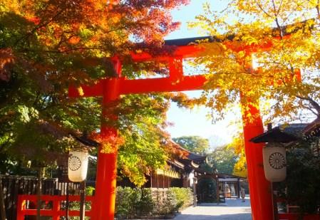 下鴨神社の紅葉の2017年の見頃の時期は?見所やアクセス・混雑も