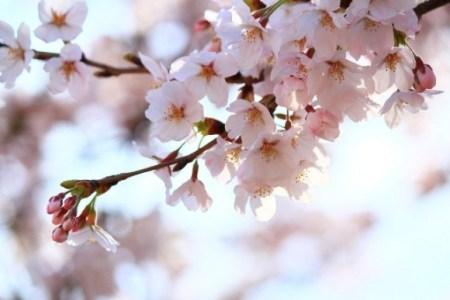 新春の候はいつまで使える?意味・読み方・時期、例文と結びも紹介