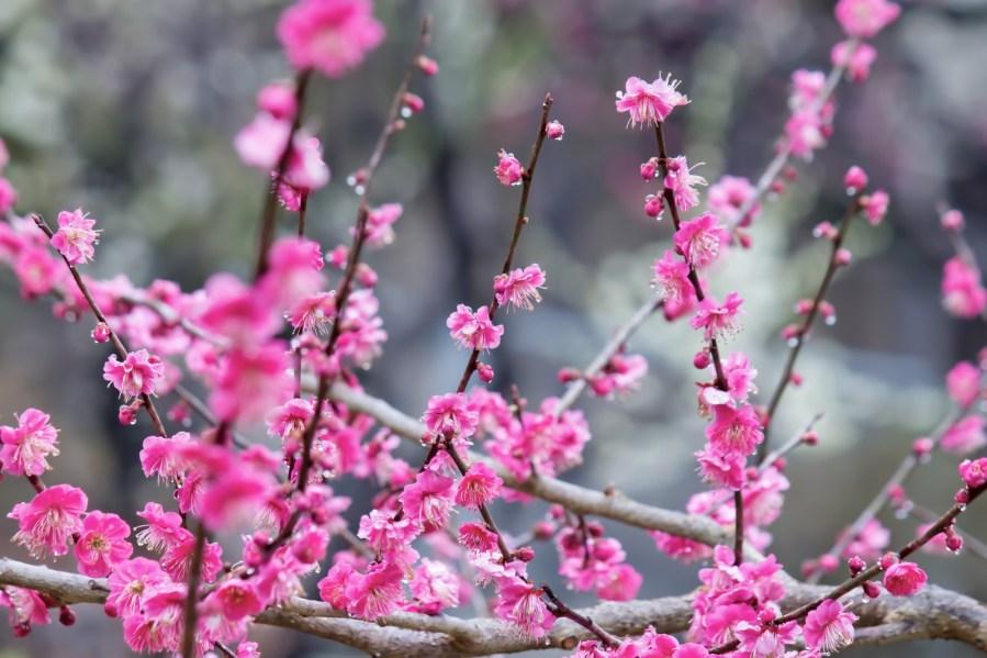 春寒の候の意味は?時期・いつまで使うか、読み方、使い方や例文も