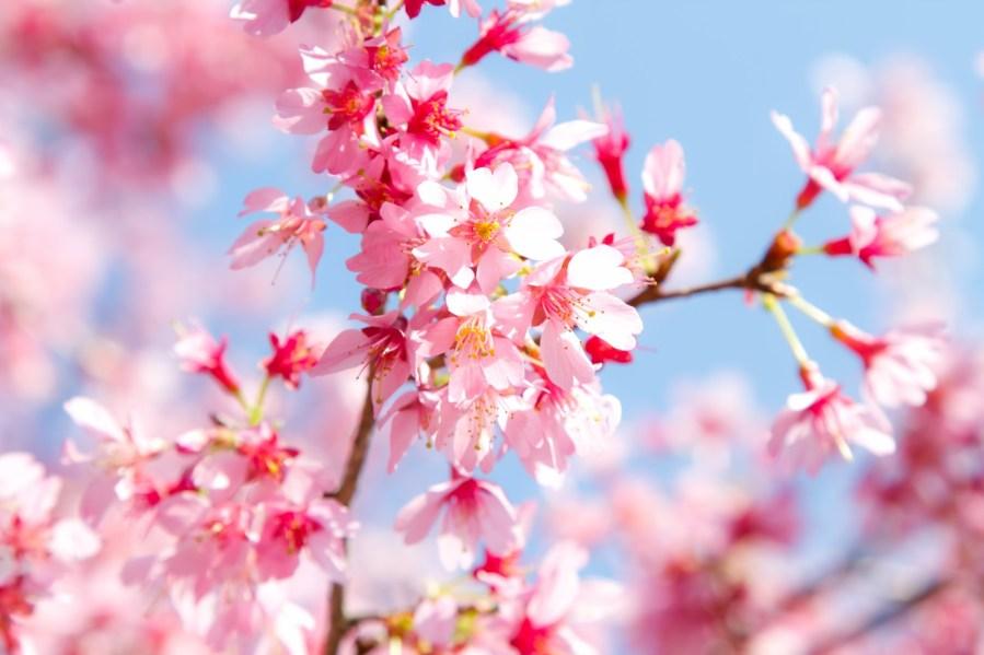 陽春の候の読み方や意味!時期はいつ・何月か、使い方や例文も紹介