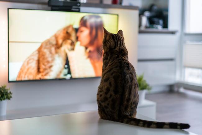 【猫とテレビに関する調査】テレビを見る猫は約5割。お気に入り番組第1位「岩合光昭の世界ネコ歩き」。好きなTVジャンルは「動物・ペット」が最も多い結果に。