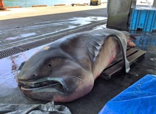 クジラ 地震