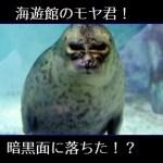 海遊館のアザラシ・モヤ君!ダースベイダー似の理由は?