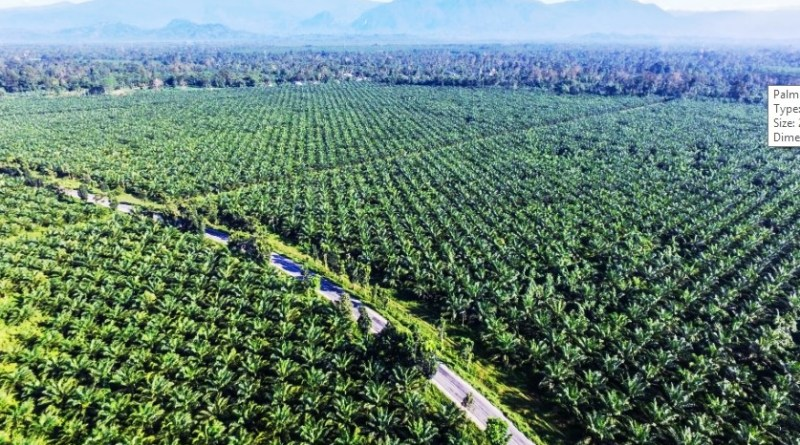 Palm oil Uganda