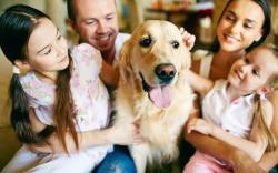 Razas de perros para familias