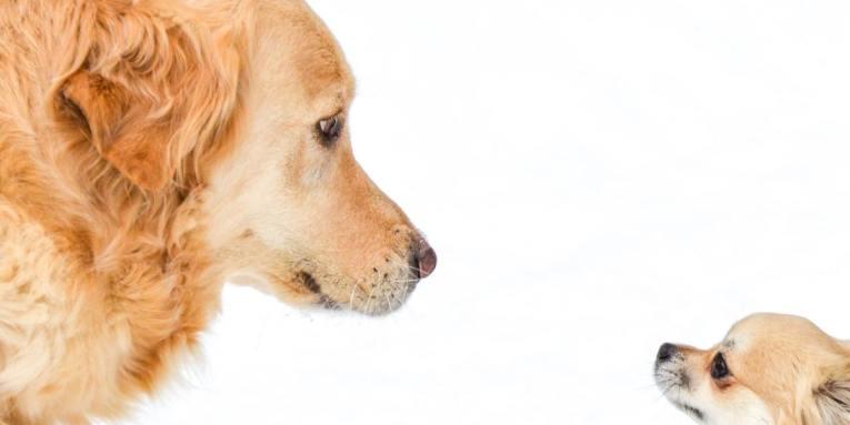 qué razas de perro son las mejores