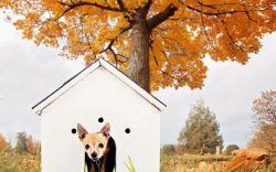 casa para perro de samsung