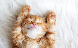 5 razones para adoptar una mascota