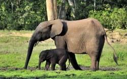 Elefante ataca de muerte a un hombre en la India