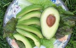 La semilla del aguacate, ¿Se puede comer?