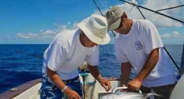 consejos de pesca, temporada de pesca los cabos, pesca deportiva los cabos, temporadas de pesca en méxico, pesca en san josé del cabo, vacaciones en los cabos, viajes a los cabos todo incluido, viajes a los cabos todo incluido 2020, paquetes a los cabos todo incluido, grand solmar los cabos