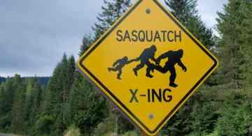 pie grande, avistamiento de pie grande, pie grande en camara, Sasquatch
