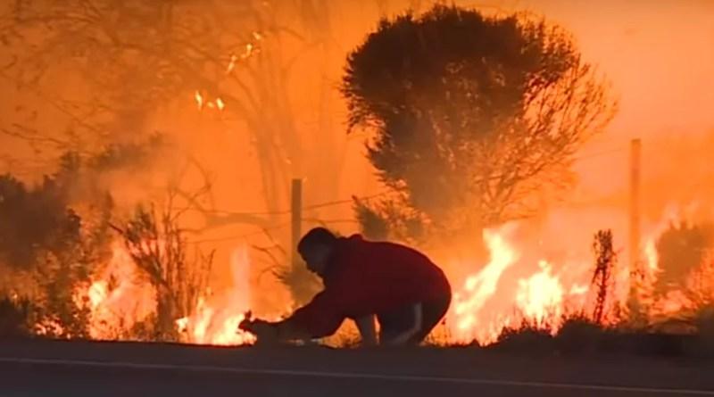 VIDEO... Hombre desafía incendio para salvar un conejo.