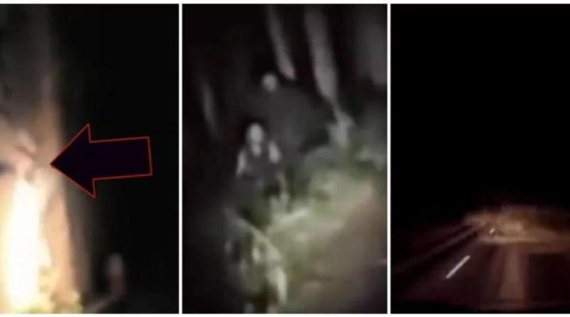 Top 5 de momentos tenebrosos en el bosque, captados en cámara