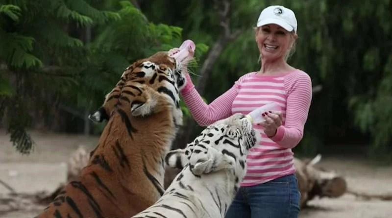 Dos tigres atacaron a la mujer que los había cuidado desde pequeños
