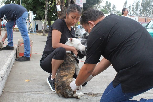 CASA POR CASA, PROTECCIÓN ANIMAL APLICA VACUNA ANTIRRÁBICA EN EL MUNICIPIO DE PUEBLA
