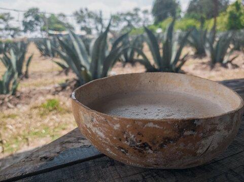 EL PULQUE Y SU IMPORTANCIA EN MEXICO