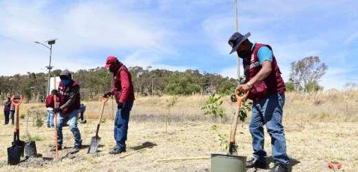 AYUNTAMIENTO DE PUEBLA SEMBRARÁ MÁS DE 31 MIL ÁRBOLES PARA MITIGAR EFECTOS DEL CAMBIO CLIMÁTICO EN LA CAPITAL
