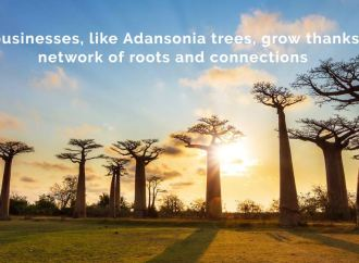 Do you need funding? Register for the Adansonia Accelerator Programme 2017 for African entrepreneurs