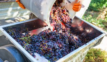IoT wine making precision agriculture