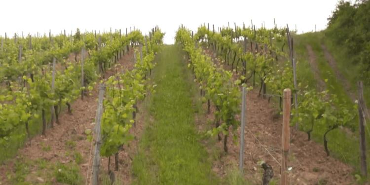 DT deutsche telekom IoT smart wine