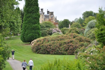 The Rhododendrons and Azaleas
