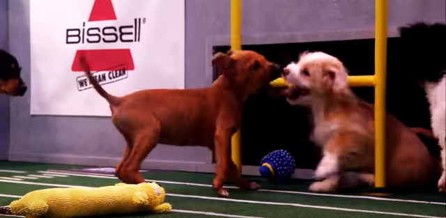 Puppy Bowl/YouTube
