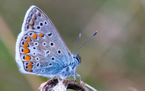 pretty colors butterfly wallpaper