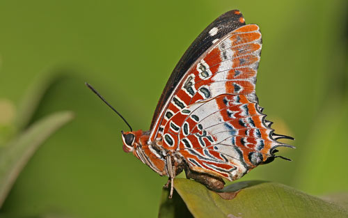 gorgeous butterfly wallpaper