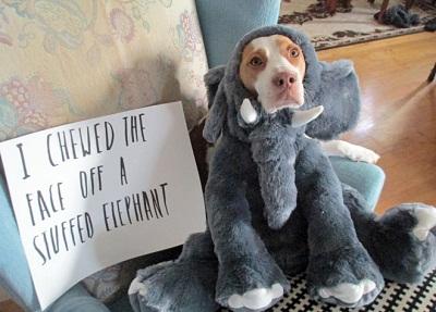 elephant costume funny dog