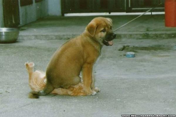 last cat dog fight funny wallpaper