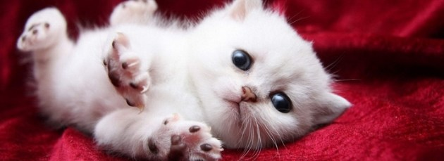 cuttest kitten fb cover