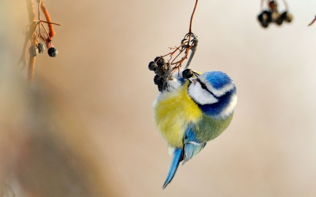 cute small bird photo