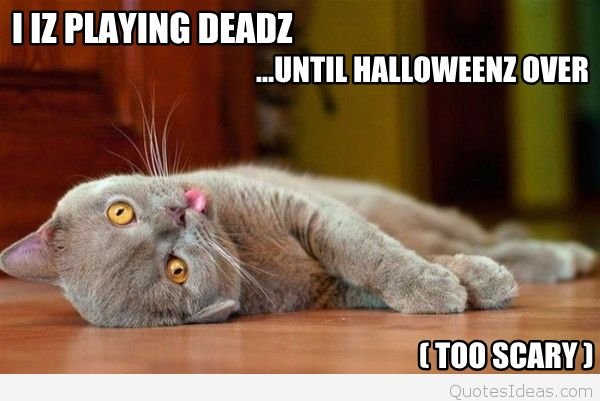 halloween-animals-cat-play-dead-meme-photo