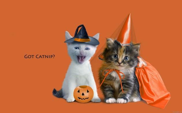 funny-halloween-cat-costume