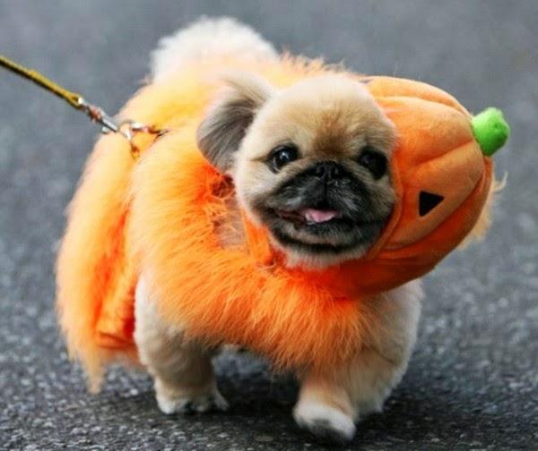 funny-halloween-pet-costumes