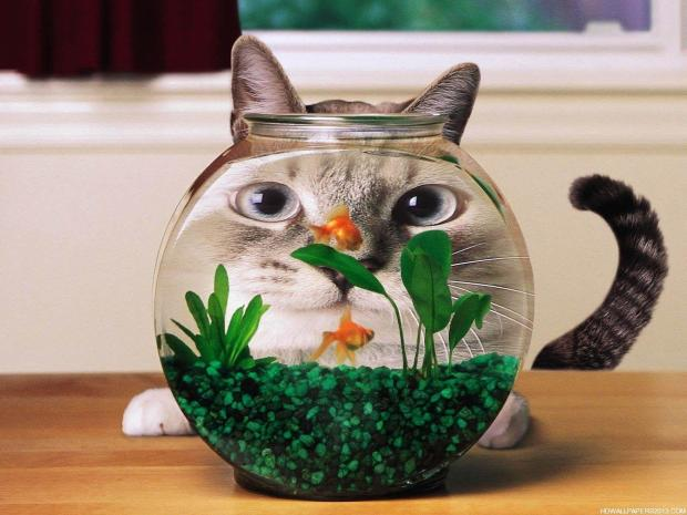 funny 3d cat picture