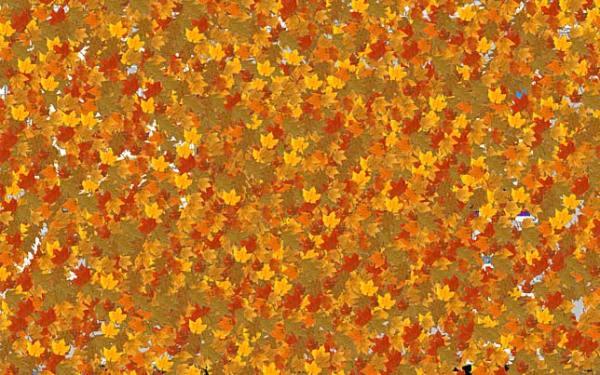 3D beautiful autumn