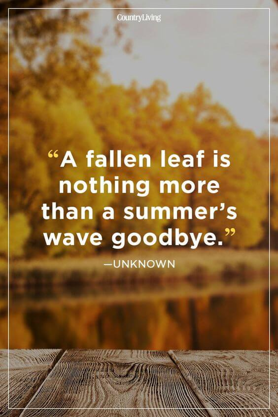 Goodbye Summer Quotes Entertainmentmesh