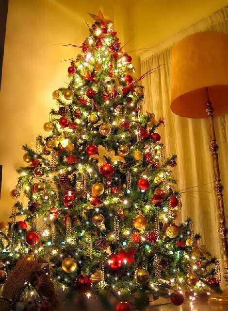 Illuminated Christmas tree lights