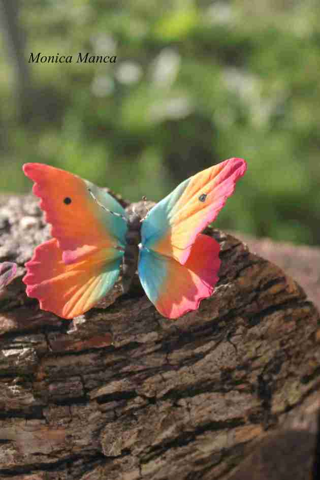 pale colored copper butterfly