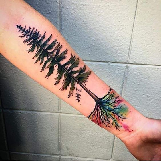 pine tree forearm tattoo inked with watercolor roots