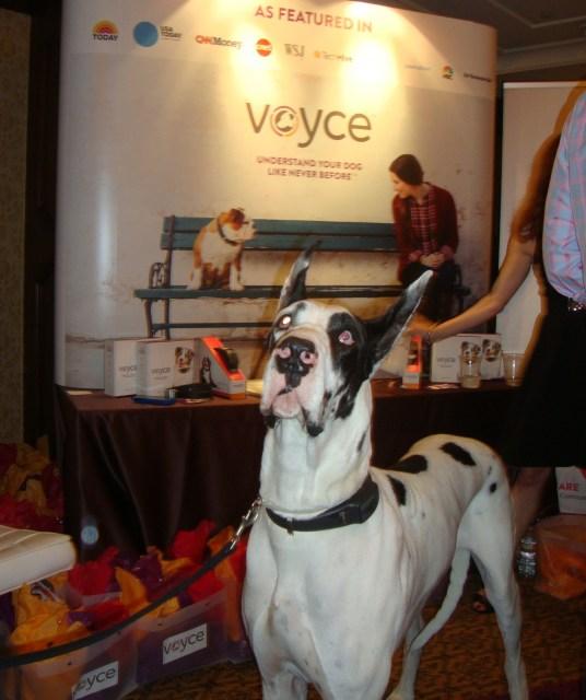Voyce dog, photos by Margie Barron