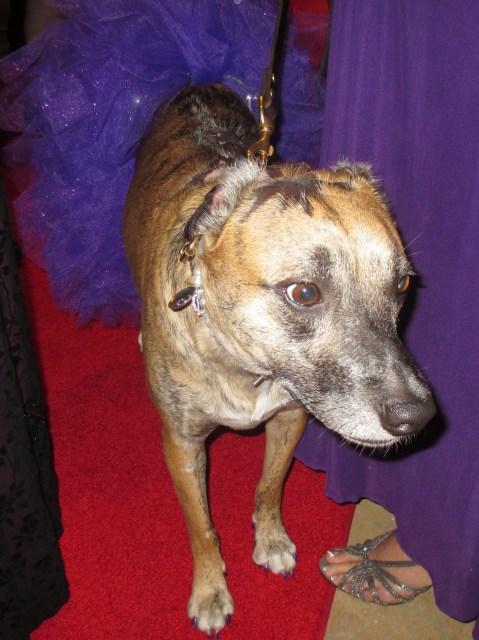 Hero Dog 2014 Susie (photo by Margie Barron)