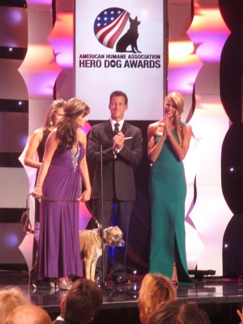 Susie 2014 Hero Dog (photo by Margie Barron)