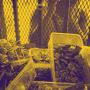 Ban the Selling of Snacks Near Schools: CSOs