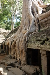 The surrounding jungle has gradually encroached on this abandoned temple near Angkor